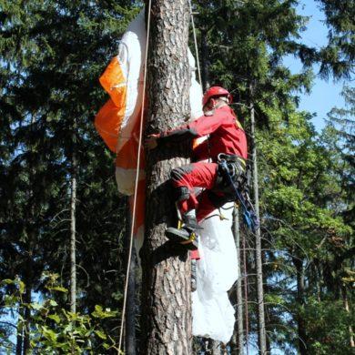 Spadochroniarz na drzewie (ćwiczenia)